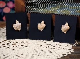 2016 - Bijoux - Pins Coquillages